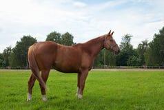 Horse, field and sky stock photos