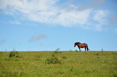 Horse. On the field on a sunny day stock photography