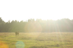 Horse on the field. In the sunshine Royalty Free Stock Photos