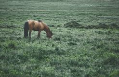Horse in a field Stock Photo