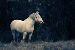 A horse on a field Stock Photo