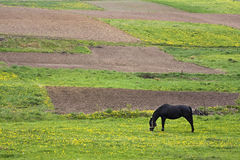 Horse and fields Royalty Free Stock Photo