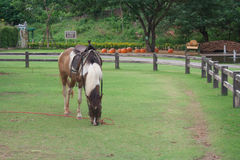 Horse in the filed. With fence Stock Image