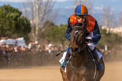 Horse on the finnish line. Thoroughbred horse on the finish line. Competition horse races stock photo