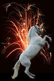 Horse fireworks. Happy new year! A white rearing horse against a fountain of fire Stock Photos