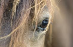 Horse with flies tormenting him. Poor horse with flies in its eyes tormenting him stock photo