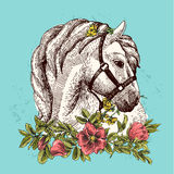 Horse with flower Stock Images