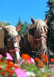 Horse Flowers Stock Photo