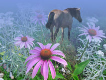 Horse, flowers, fog. Royalty Free Stock Photo