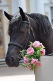 Horse with flowers Stock Photography