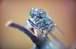 Horse-fly, macro, wild Stock Image