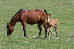 Horse and foal Stock Photos