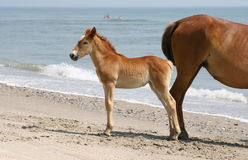 Horse and foal on beach Stock Photo