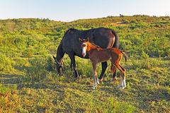 Horse with foal in the countryside Royalty Free Stock Images