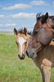 Horse and foal in field Stock Photos