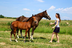 Horse and foal with girl Royalty Free Stock Photo