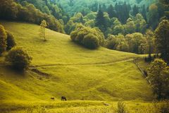 Horse with a foal are grazed on the green hill. In the summer Stock Photo
