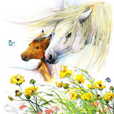 Horse and foal motherhood. background greetings illustration. Horse and foal with meadow flowers. watercolor illustration Royalty Free Stock Images