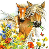 Horse and foal motherhood. background greetings illustration. Horse and foal with meadow flowers. watercolor illustration Royalty Free Stock Photos
