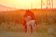 Horse with foal Stock Images