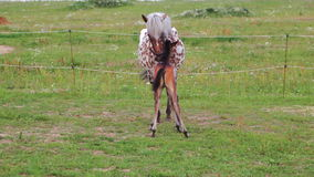 Horse with a foal on pasture stock video footage