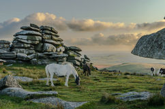 Horse and foal at  Rough Tor Stock Images