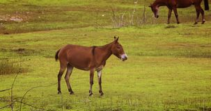 Horse foal standing up on a field