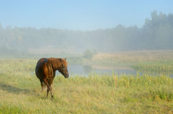Horse in a fog Stock Photo