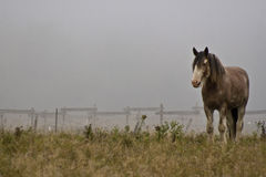 Horse in fog Stock Photos