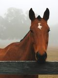Horse in the Fog Stock Images