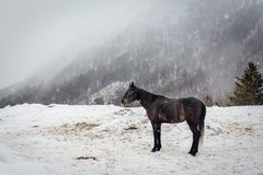 Horse in fog in Cheget, Elbrus royalty free stock photography