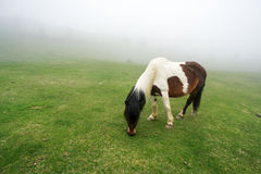 Horse in fog grazing Stock Photography