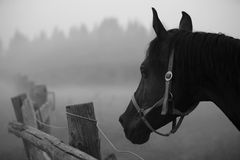 Horse in the fog. Horses in the fog in remote Russia Royalty Free Stock Photography