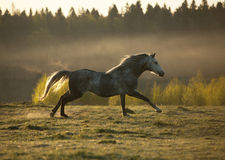 Horse on fog meadow in morning Stock Photos
