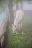 Horse in a fog Royalty Free Stock Photography