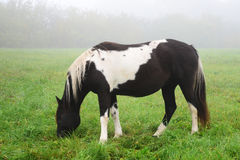 Horse in the fog. Sigulda Stock Image