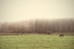Horse with fog and vintage effect Royalty Free Stock Image