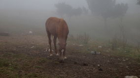 Horse in the fog stock footage