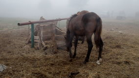 Horse in the fog stock video footage