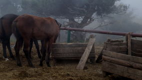 Horse in the fog stock video