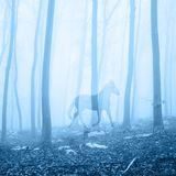 Horse in the foggy forest landscape Stock Images