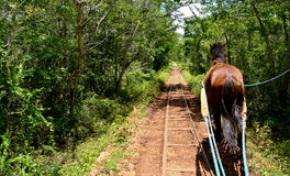 Horse following forest tracks Royalty Free Stock Image