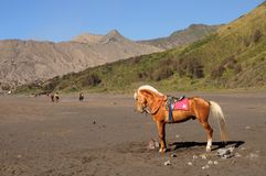 Horse at the foothills of Bromo volcano in Indonesia Stock Photos