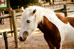 Horse. In the foreground with details Royalty Free Stock Photos