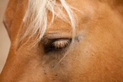 Horse. In the foreground with details Royalty Free Stock Images
