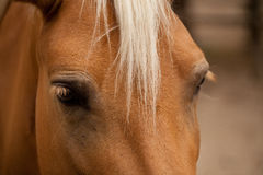 Horse Royalty Free Stock Image