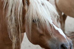 Horse. In the foreground with details Royalty Free Stock Photo