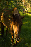Horse in the forest Royalty Free Stock Photos