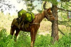 Horse in a forest Stock Images