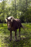 Horse in forest Stock Photos